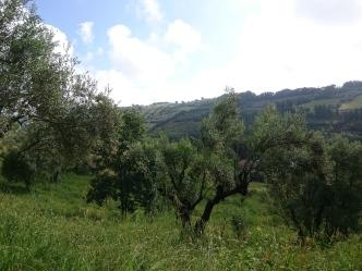 Farm view 3